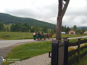Stadnina Koni Huculskich w Regietowie (13)