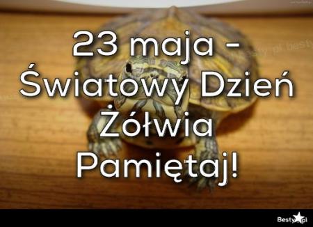 Światowy Dzień Żółwia - 23 maja...